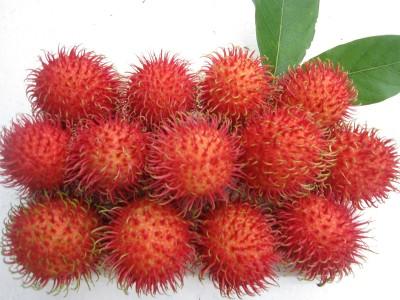 Tổng hợp những loại hoa quả tốt cho mắt 13